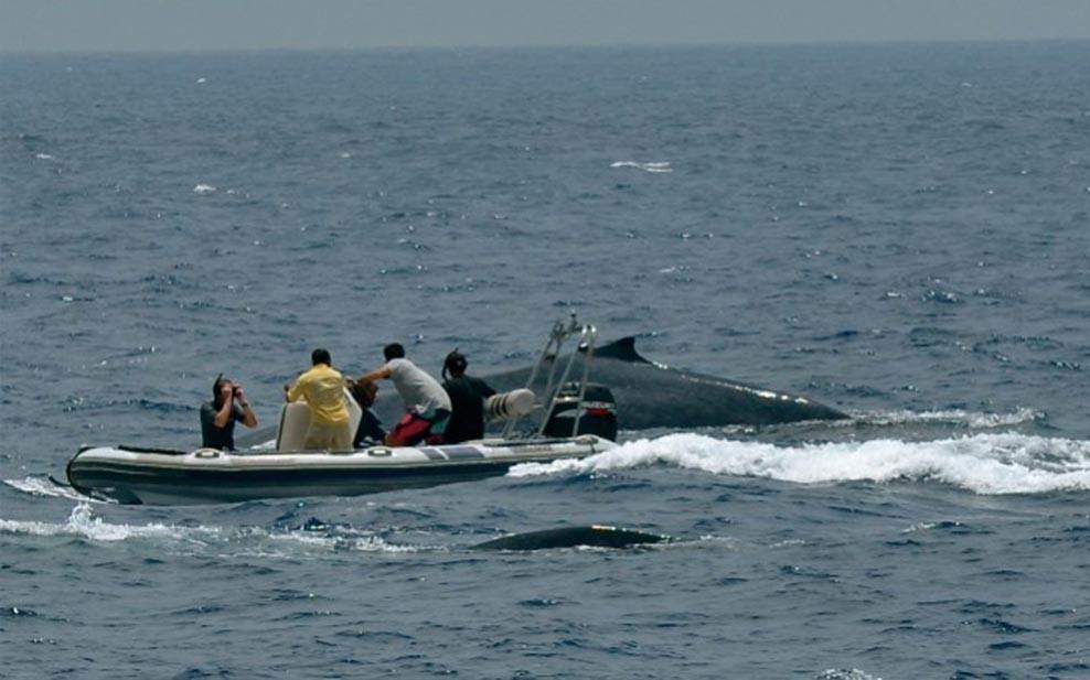 craig-leeson-plastic-ocean-whales