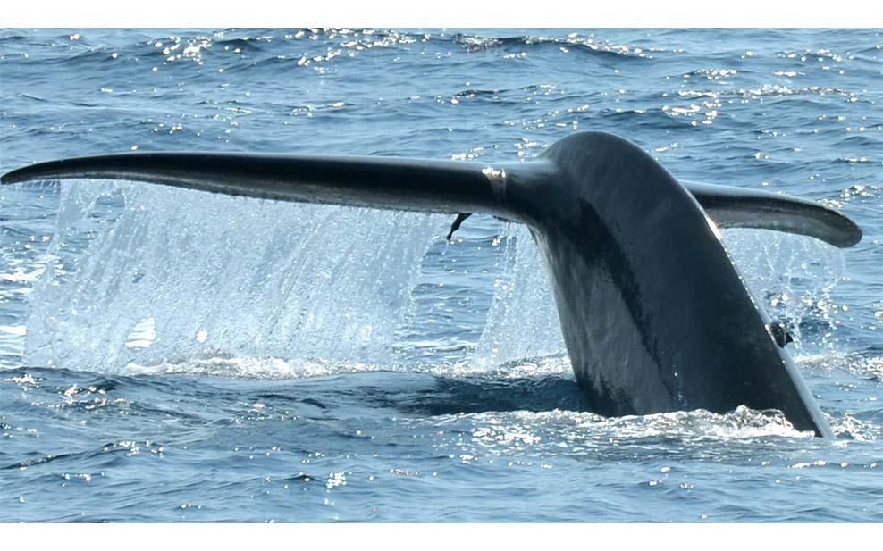 plastic-ocean-whale-tail